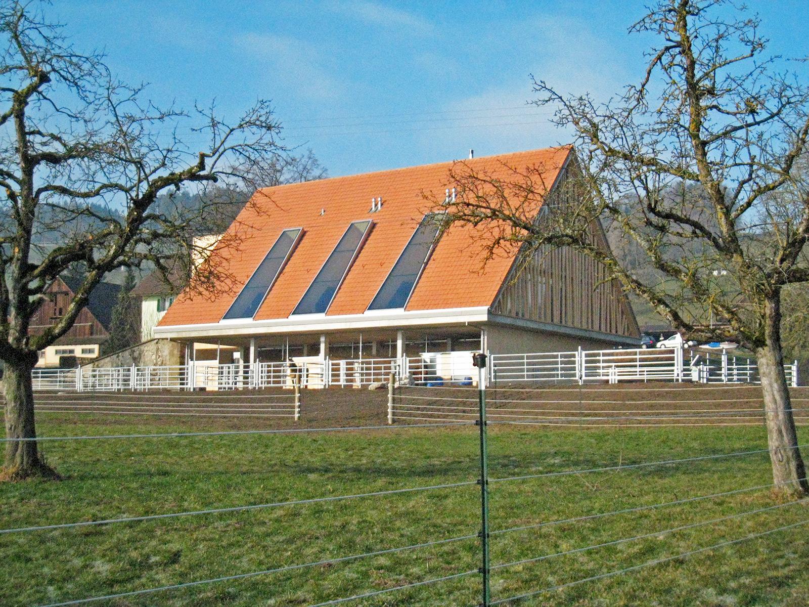 wiggwil farm, paddock view